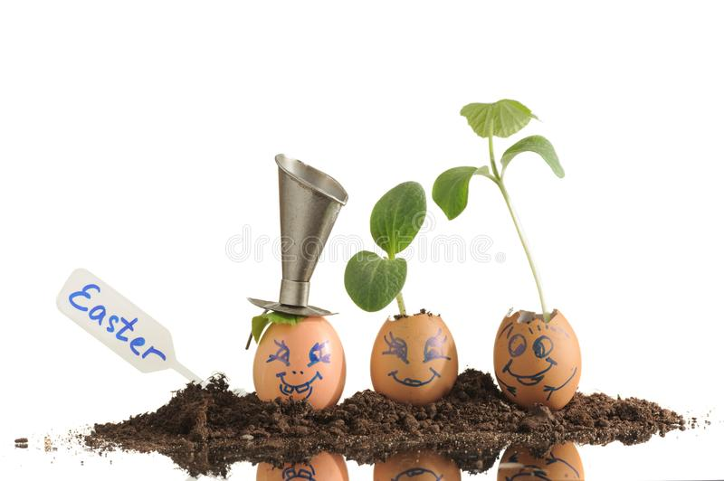 Three organic seedling plants in funny Easter Eggs isolated royalty free stock images