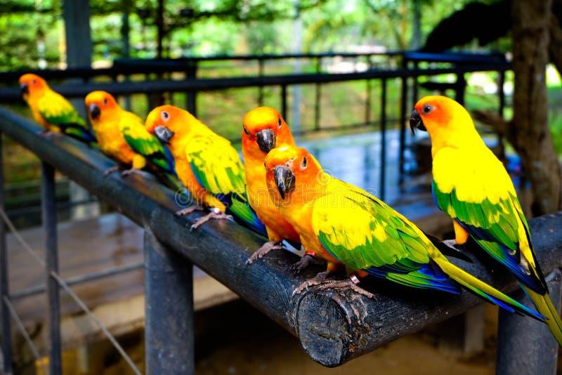 Three Pairs of Parrots royalty free stock photo