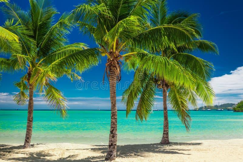 Three palm trees over blue lagoon in Fiji royalty free stock photos