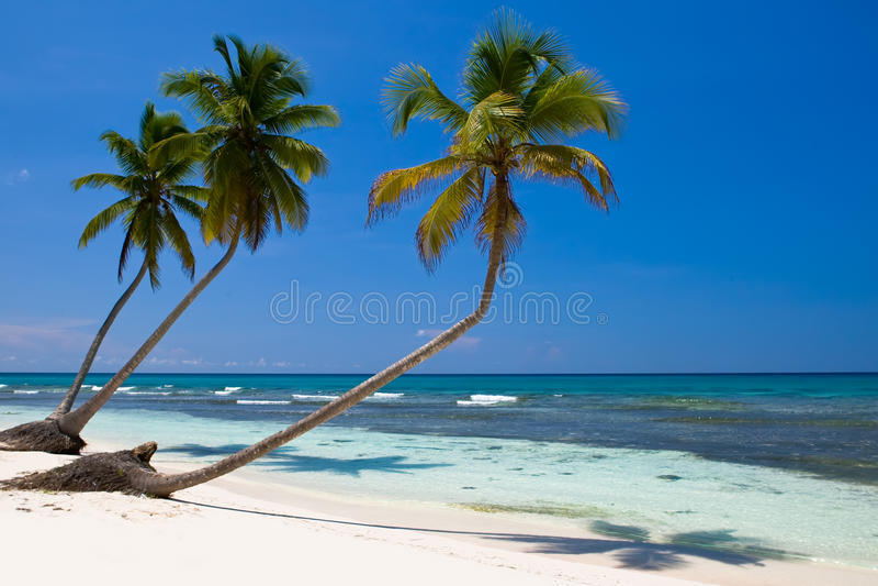 Download Three Palms On The Beach Island Stock Photo - Image: 9613520