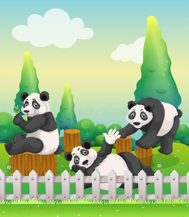Three panda bears in the zoo stock illustration