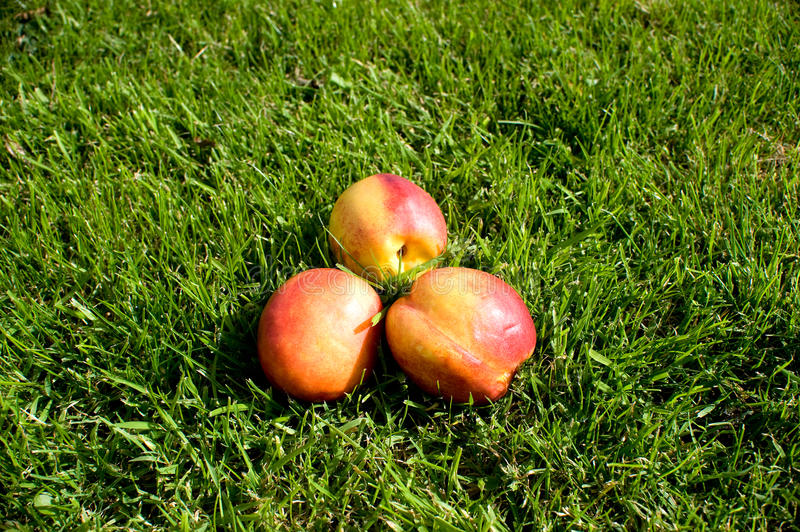 Three peach royalty free stock images
