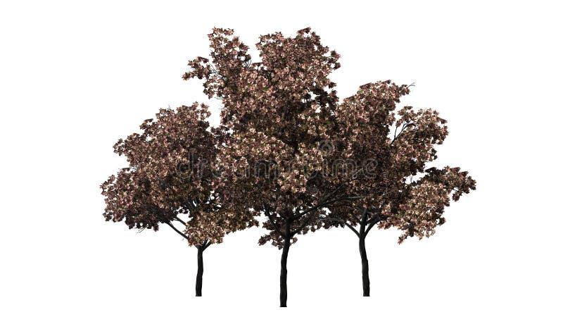 Three Peach trees in the autumn royalty free stock photos