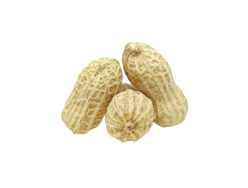 Three peanuts with texture isolated on white background. Dried peanuts for snack in closeup stock photography