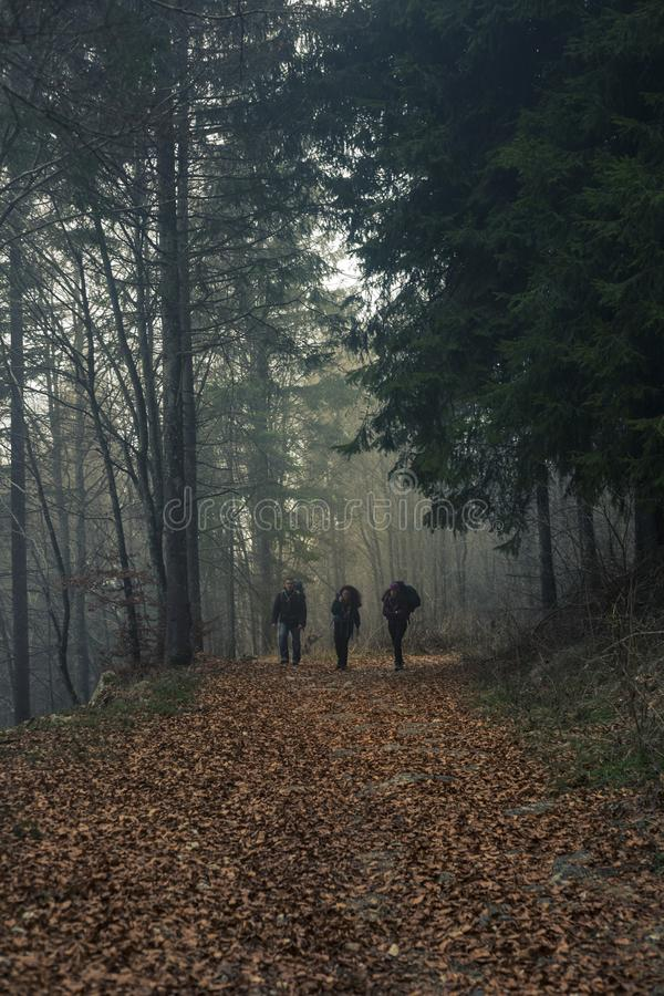 Three Person Walks on Dried Leaf Covered Pathway Surrounded by Trees royalty free stock images