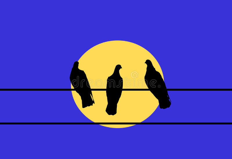 Three Pigeons. Perched on an electrical wire stock illustration