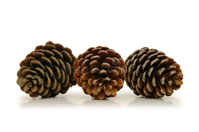 Download Three pine cones stock image. Image of holiday, evergreen - 1414643