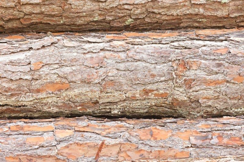 Download Three Pine Tree Logs stock image. Image of wood, trunks - 25377169