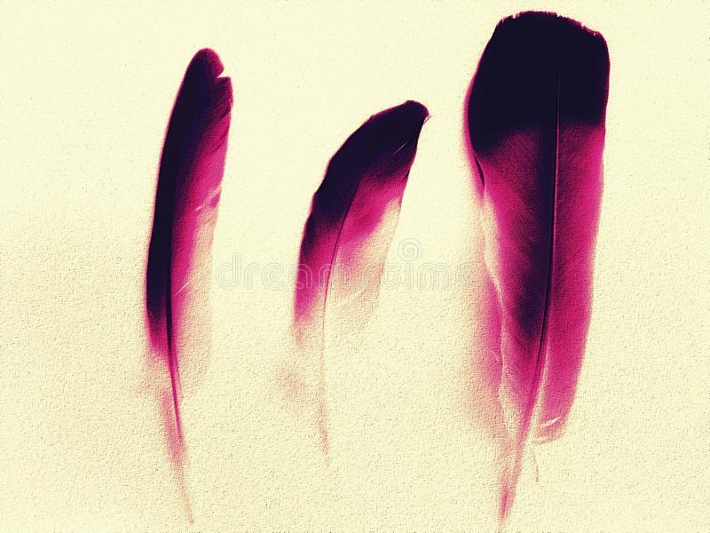 Pink feathers royalty free stock photography