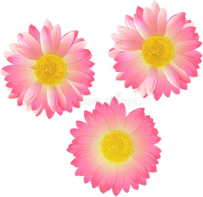 Three pink flowers. Vector illustration royalty free stock photography