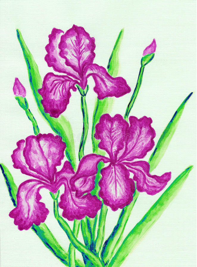 Three pink irises. Hand painted picture, watercolours stock illustration