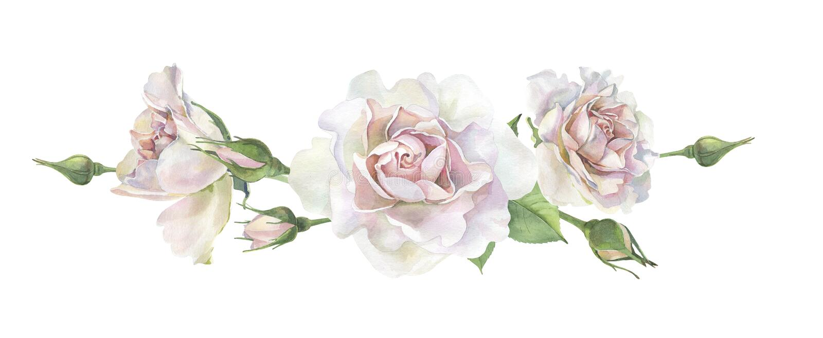 Three pink watercolor roses stock illustration