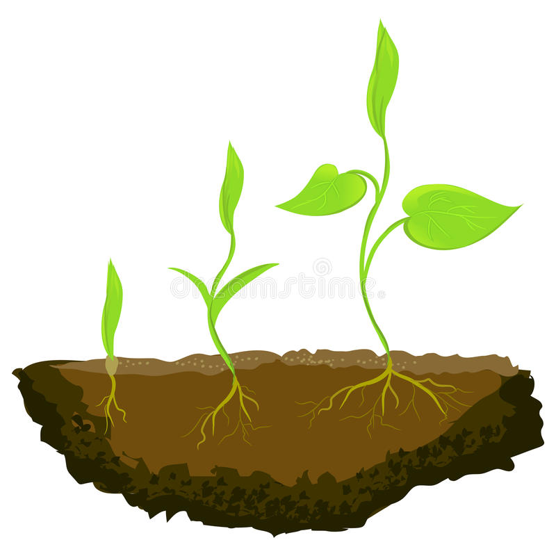 Three plants growing in the ground. Vector illustration vector illustration