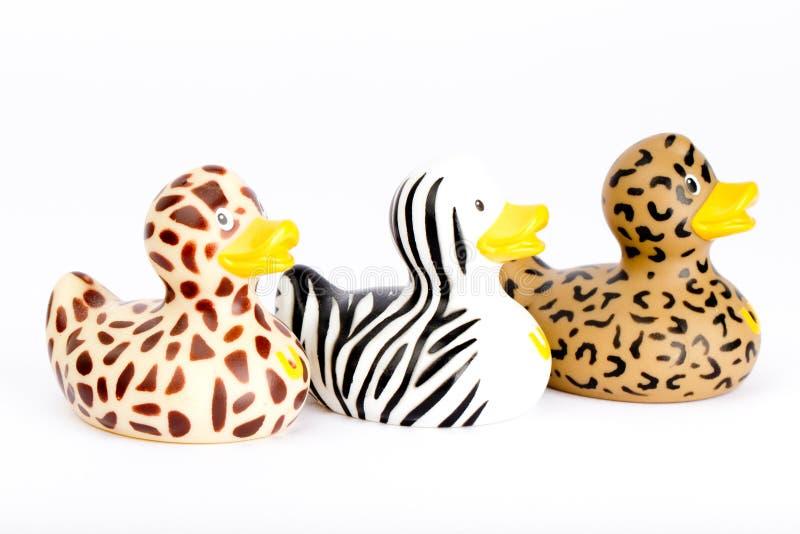 Three plastic wild ducks stock photography