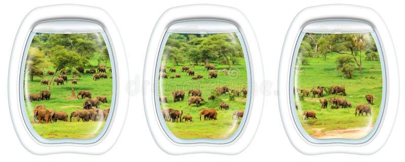 Porthole windows on Elephants royalty free stock images