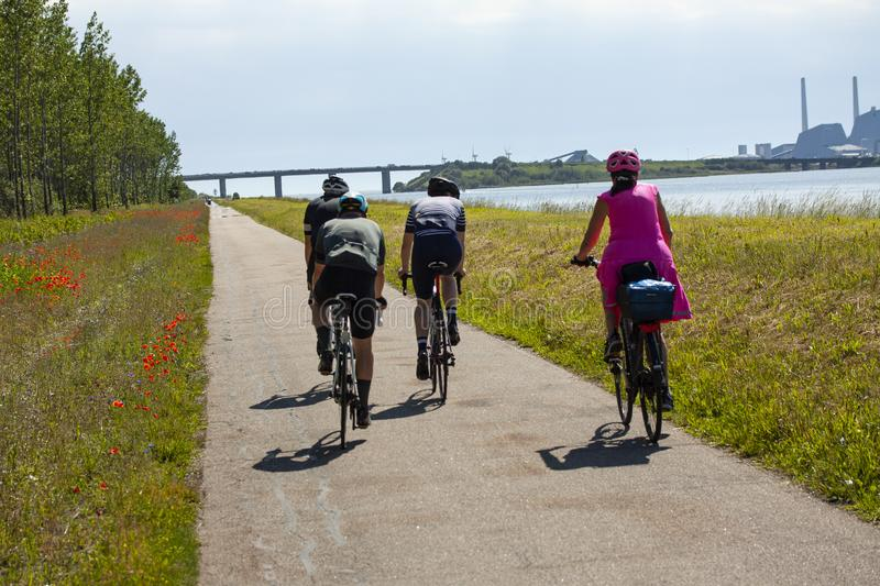 Three professional bicycle riders and one relaxed woman in pink dress cycling in nature by the sea with green grass and poppies on stock images