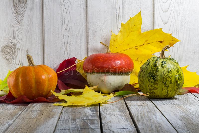 Three pumpkin with colorful autumn leaves on white wood background stock image