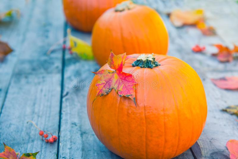 Three pumpkins with fall maple leaves on old rustic wooden background. Autumn harvest, thanksgiving, halloween concept. healthy di stock image