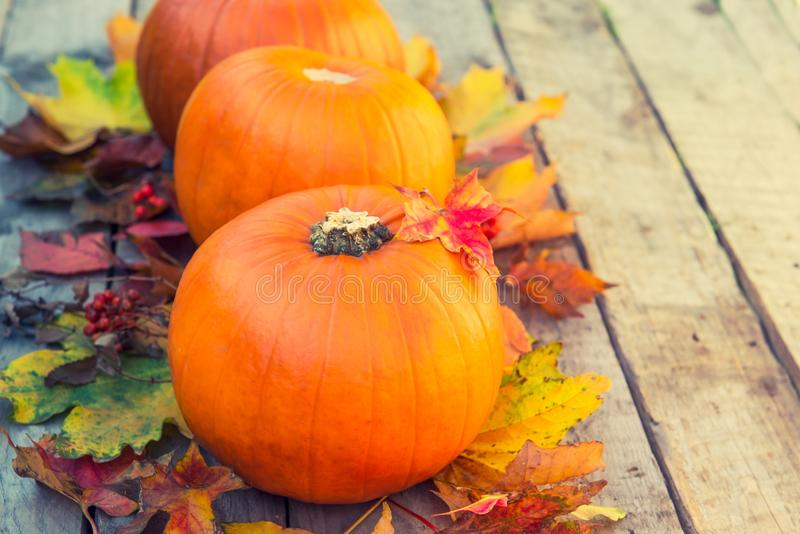 Three pumpkins with fall maple leaves on old rustic wooden background. Autumn harvest, thanksgiving, halloween concept. healthy di stock images