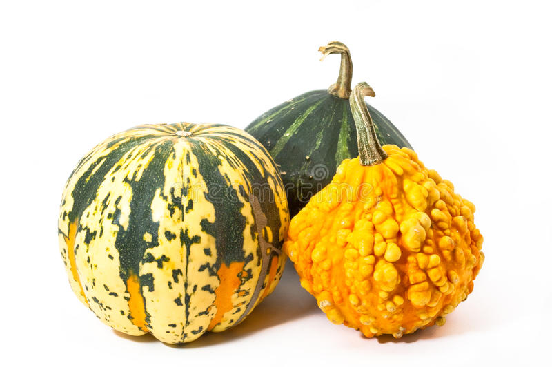 Download Three Pumpkins Before White Background Stock Image - Image: 11297283