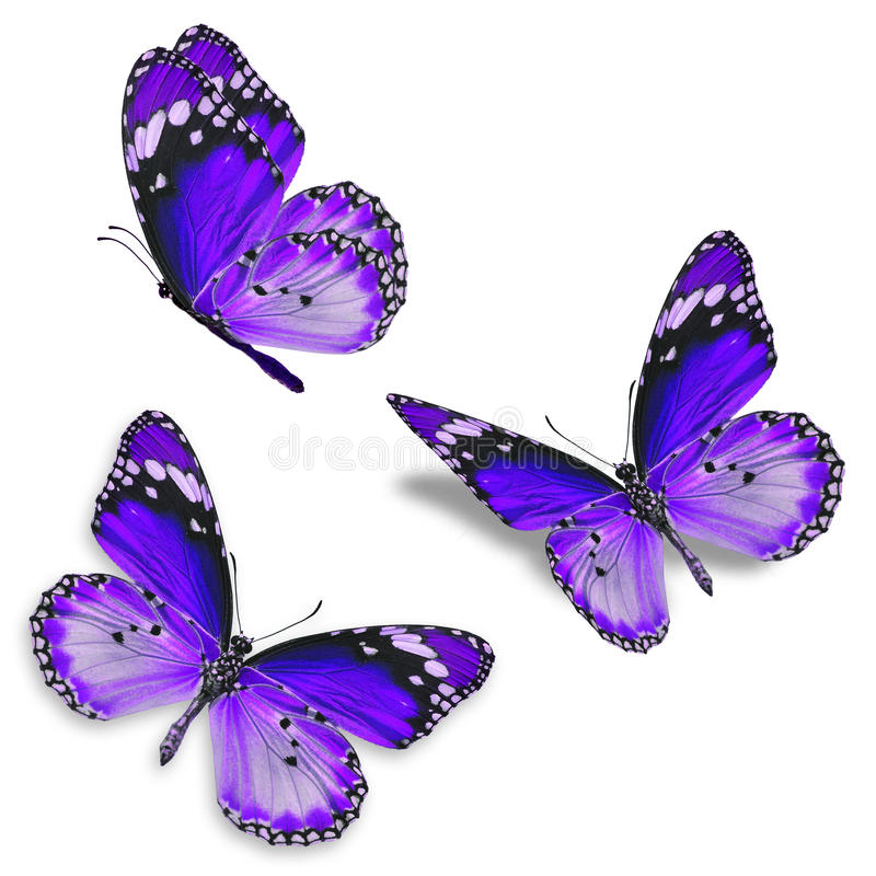 Three purple butterfly royalty free stock photography