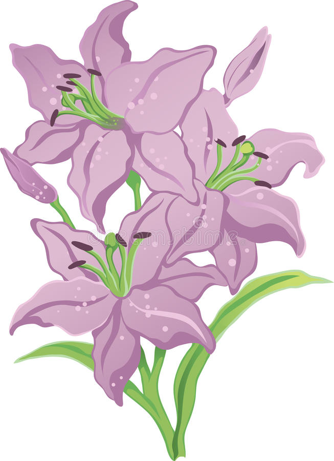 Download Three purple lilies stock vector. Image of colored, lilies - 23568322