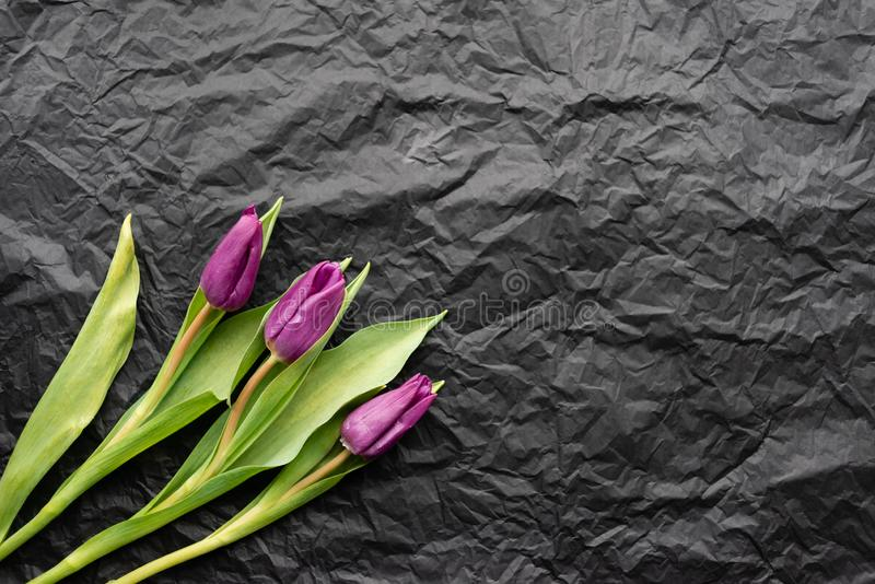 Three purple tulips on a black background in the frame. Picture of flowers stock images