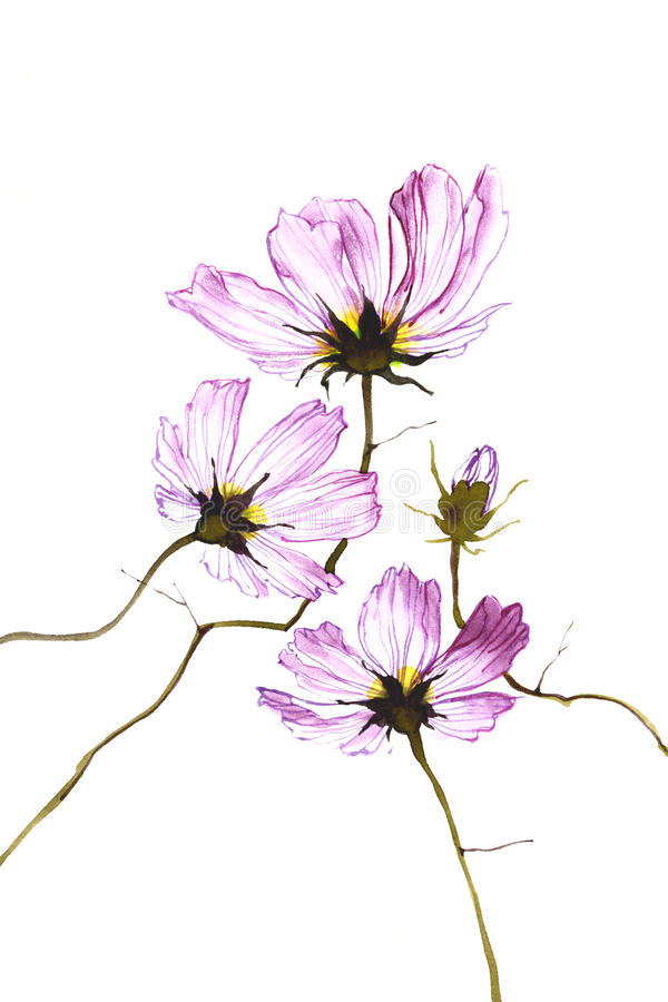 Download Three Purple Watercolor Flowers On White Background Stock Illustration