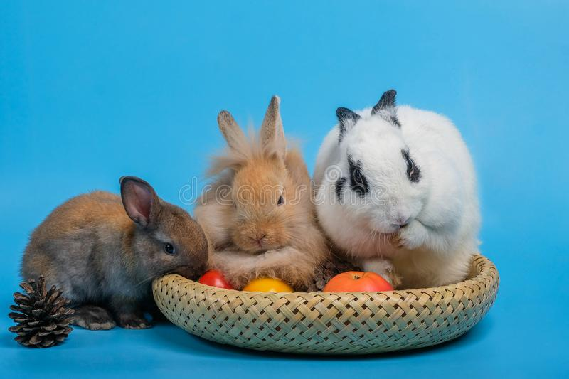 Three rabbits in the vegetable garden on blue background. Three rabbits in the vegetable garden on a blue background stock photography