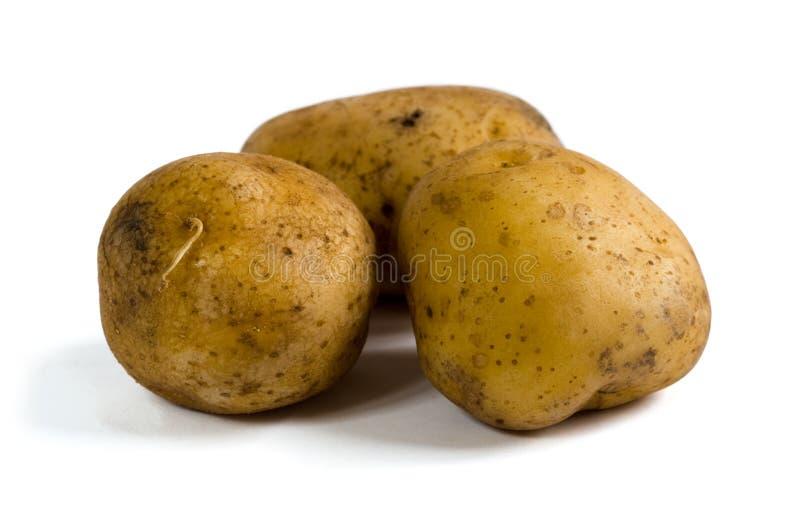 Three raw potatoes on white background royalty free stock photography
