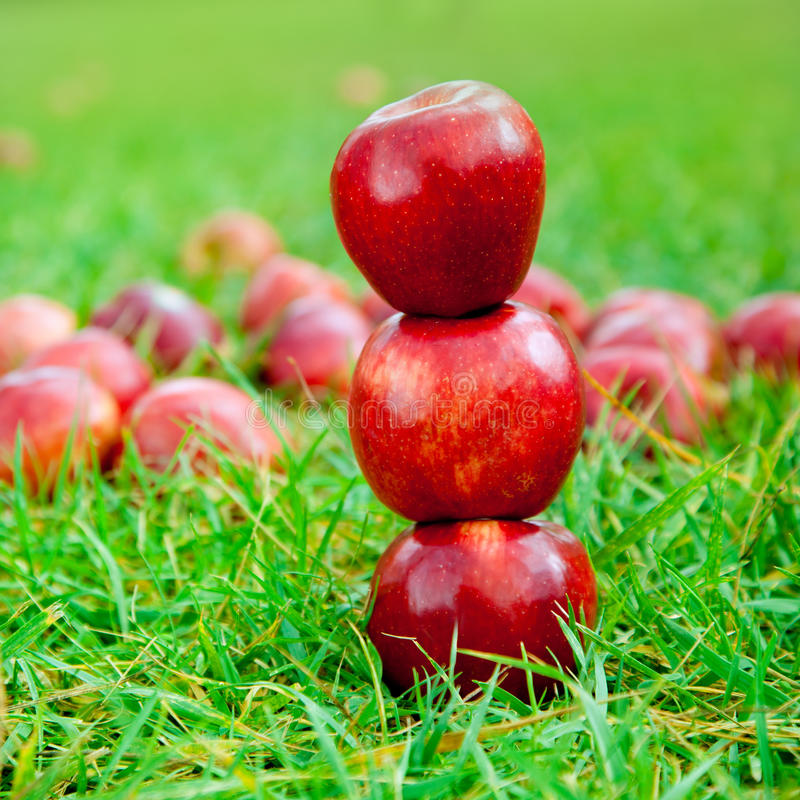 Three red apples stacked in grass field. With many in background royalty free stock images
