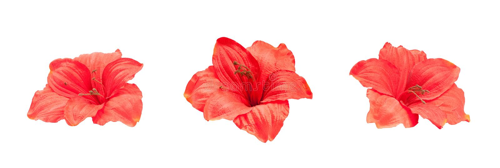 Download Three Red Artificial Lilies Stock Image - Image: 22012871
