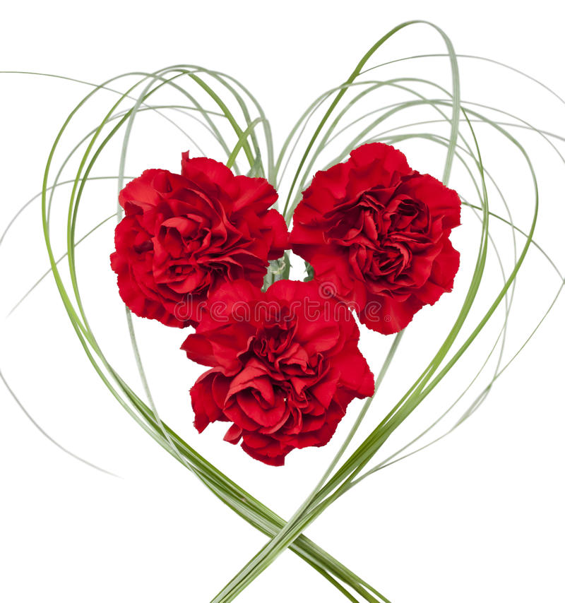 Three red carnation on white isolated background. Three red carnation with grass in the form of heart on white isolated background stock photo