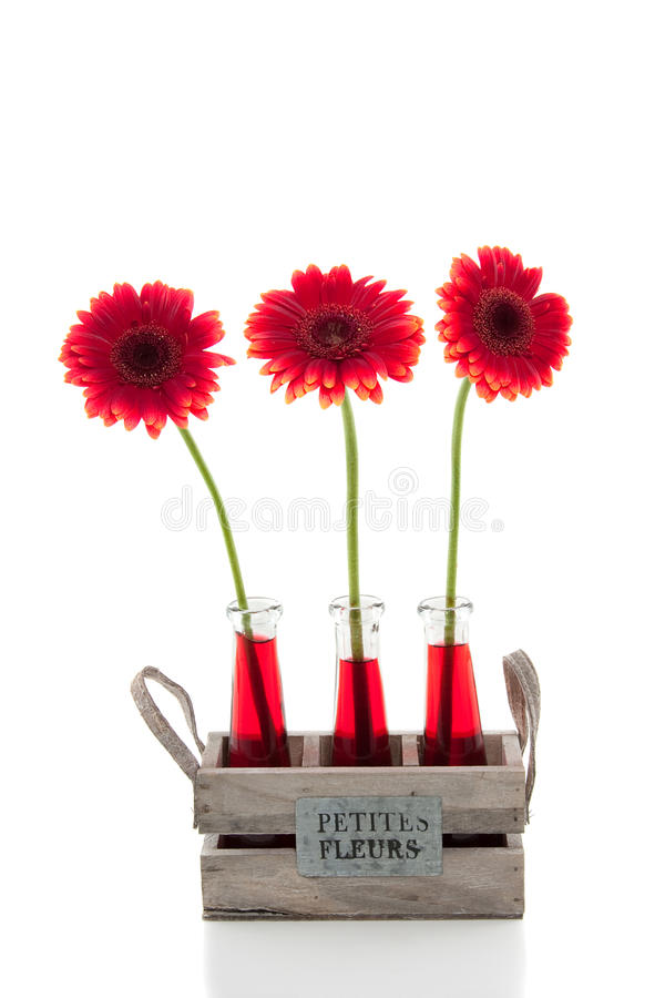 Three red gerbera's in glass vases stock image