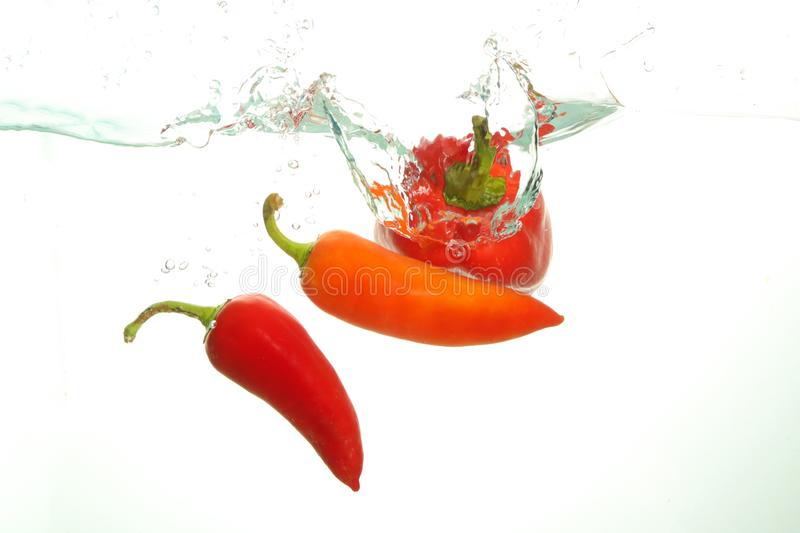 Three red hot chili pappers in water splash on white bckground royalty free stock image