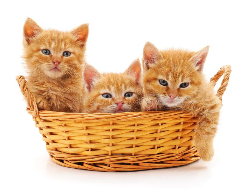 Three red kittens in a basket royalty free stock photos