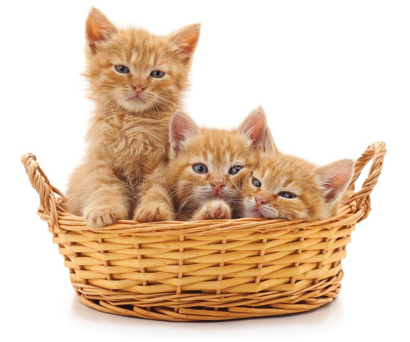 Three red kittens in a basket. stock images
