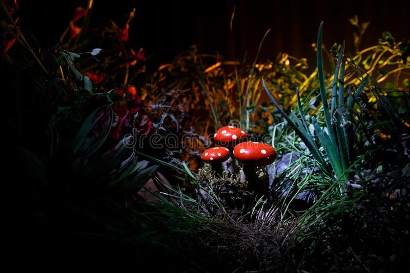 Mushroom. Fantasy Glowing Mushrooms in mystery dark forest close-up. Amanita muscaria, Fly Agaric in moss in forest. Magic mushroo. Three red mushrooms. Fantasy stock photo