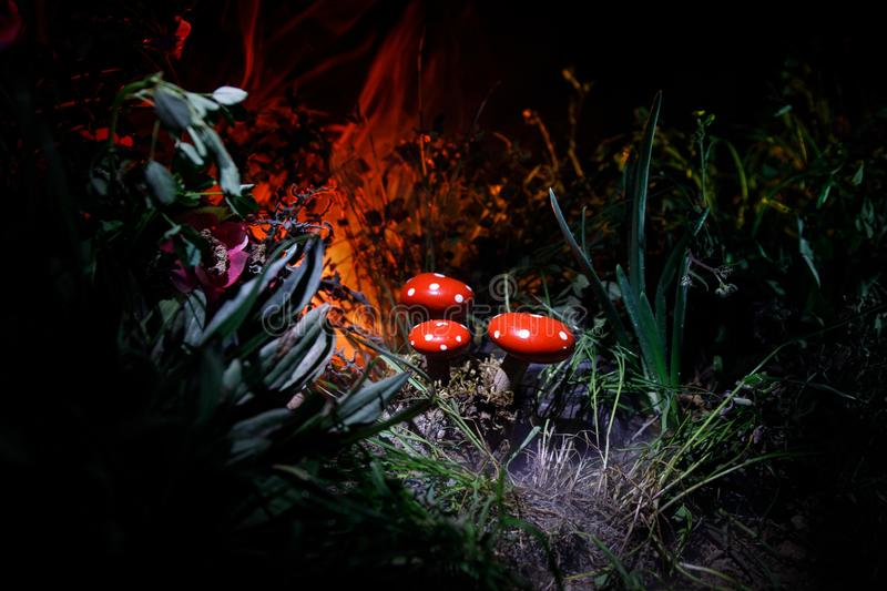 Mushroom. Fantasy Glowing Mushrooms in mystery dark forest close-up. Amanita muscaria, Fly Agaric in moss in forest. Magic mushroo. Three red mushrooms. Fantasy stock image