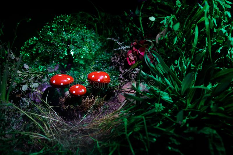 Mushroom. Fantasy Glowing Mushrooms in mystery dark forest close-up. Amanita muscaria, Fly Agaric in moss in forest. Magic mushroo. Three red mushrooms. Fantasy stock photos