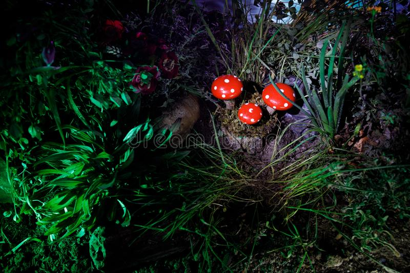 Mushroom. Fantasy Glowing Mushrooms in mystery dark forest close-up. Amanita muscaria, Fly Agaric in moss in forest. Magic mushroo. Three red mushrooms. Fantasy royalty free stock photo