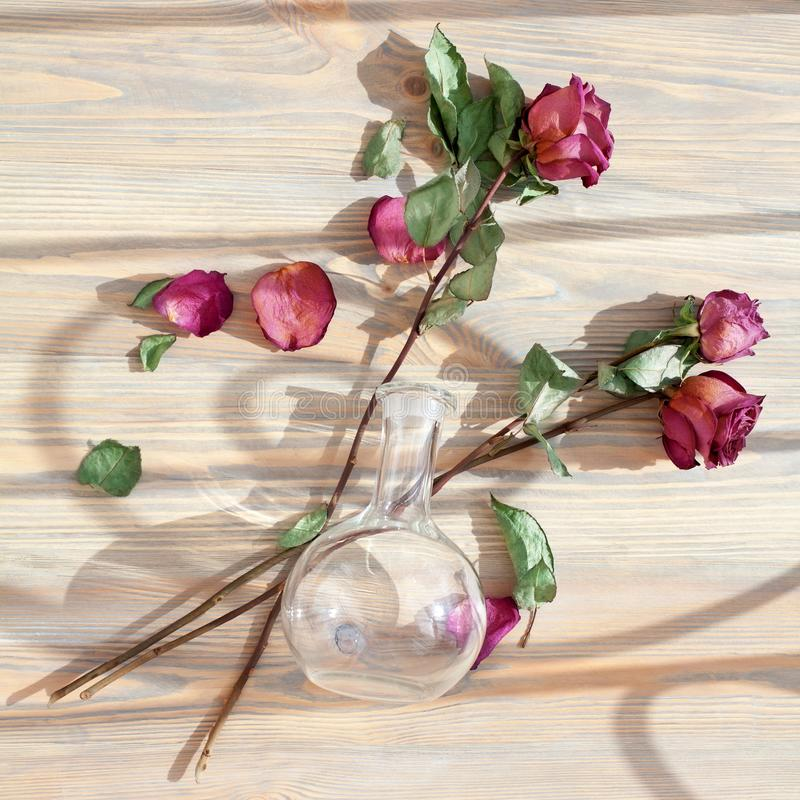 Three red roses, scattered flower petals, green leaves, glass round vase on wooden background top view closeup, floral arrangement royalty free stock photo