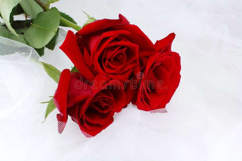 Three red roses on a white net - weddings royalty free stock photography