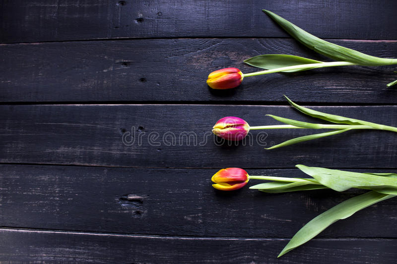 Three red tulips on rustic wooden background with spase for your. Text royalty free stock image