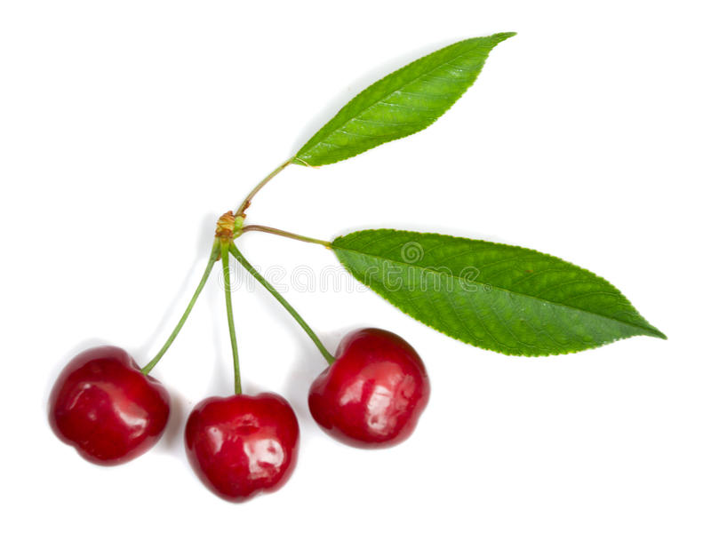 Download Three Ripe Cherries With Leaves Stock Image - Image: 14859447