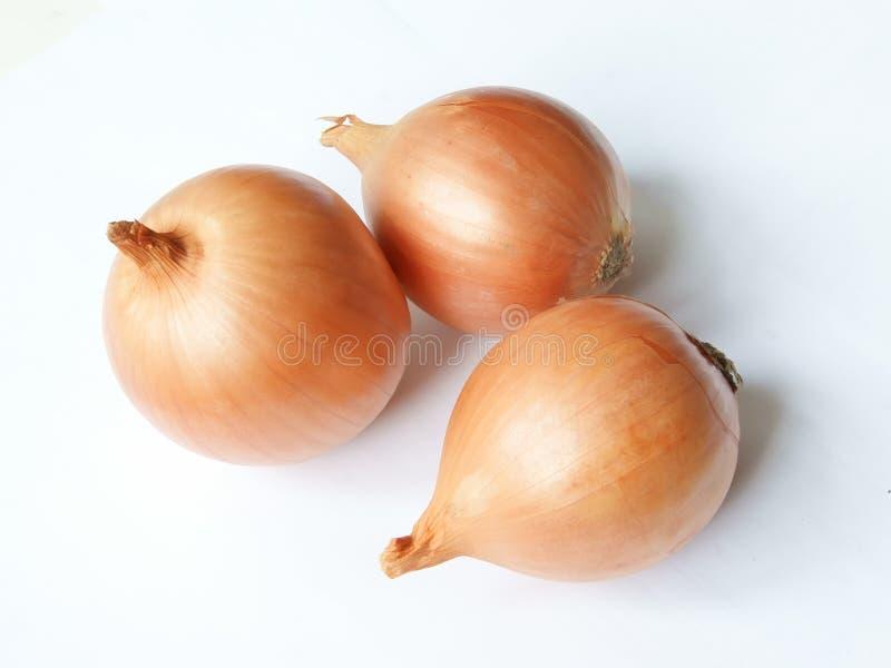 Three ripe onions royalty free stock photos
