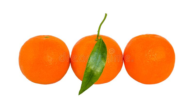 Three ripe orange mandarins with green leaf in a row isolated stock photos