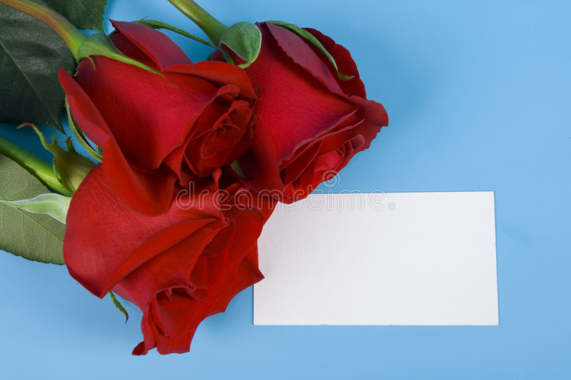 Three rose for congratulation stock photography