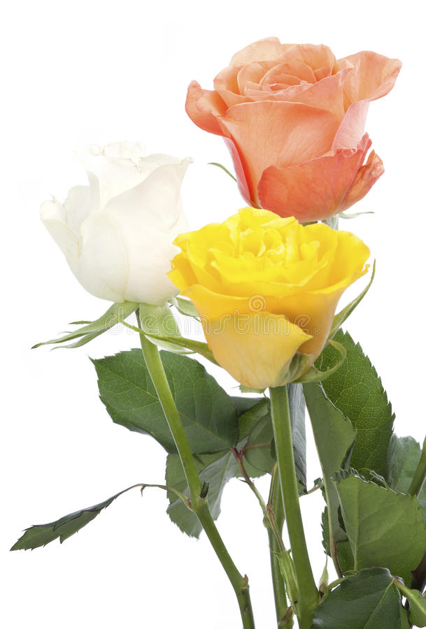 Download Three roses stock image. Image of three, rose, isolated - 29162897