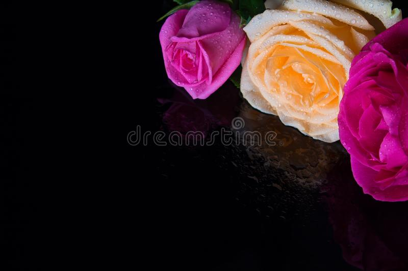 Three roses on a black mirrored table in drops of water. Red, yellow and pink rose with dew drops on black mirror background royalty free stock photo